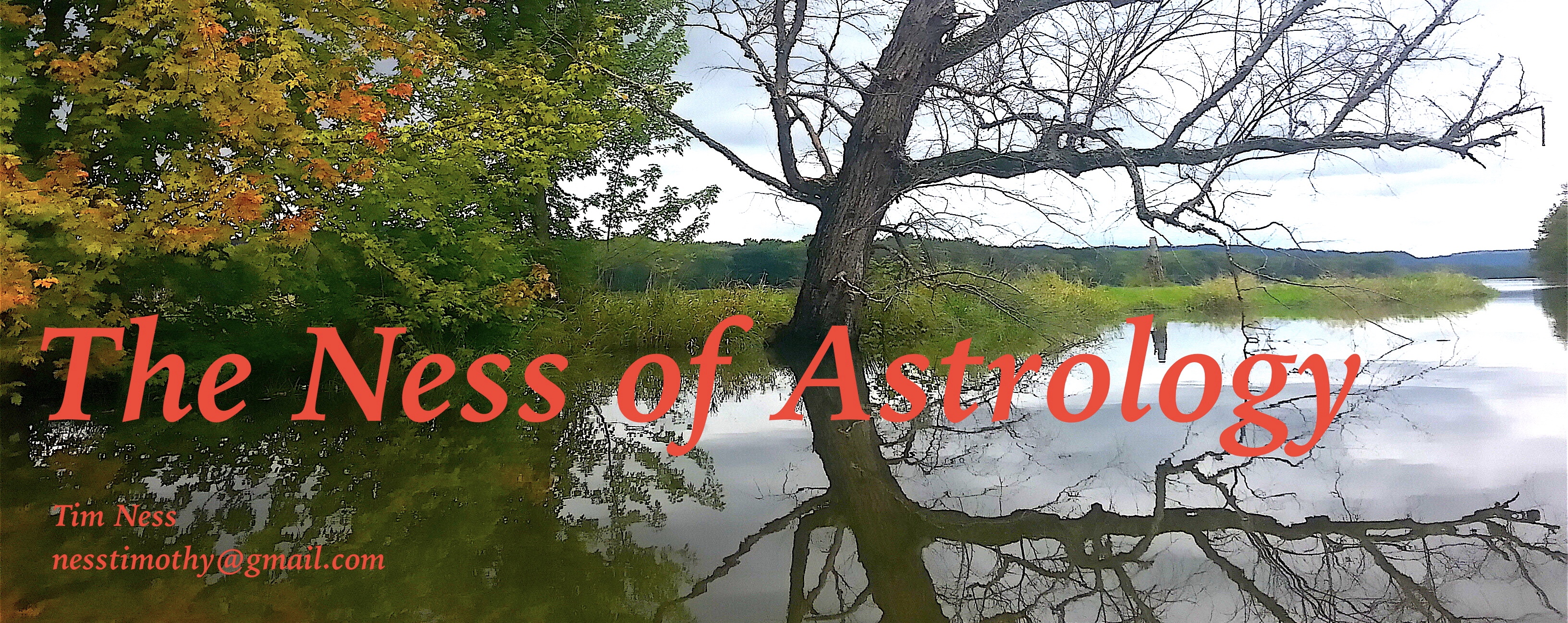 As above, so below. This is a photo of a tree reflected in water